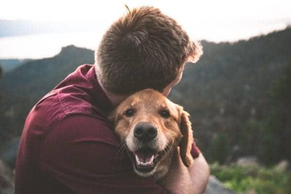 'кучета' 'котки' 'домашни любимци' 'интересни факти за домашните любимци' 'животни' 'всичко което трябва да знаем за домашните любимци'