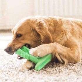 Кучешка четка за зъби - Предотвратява стоматологични проблеми